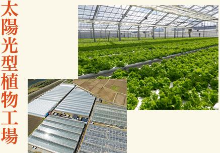太陽光型植物工場