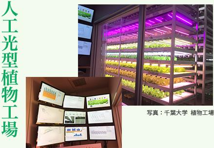 完全制御型植物工場